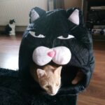 Funny Cat Bed
